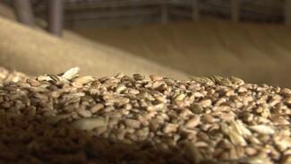 Объём экспортированной из Воронежской области пшеницы вырос в 10 раз