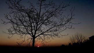 Пропавшего без вести 32-летнего воронежского сельчанина нашли мёртвым