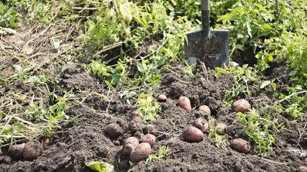 Житель Воронежской области сломал рёбра работавшему на огороде соседу