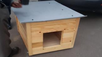 В Воронеже неизвестные украли у бездомной собаки будку