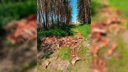 Лесники пожалуются в полицию из-за кладбища костей в воронежском Подгорном