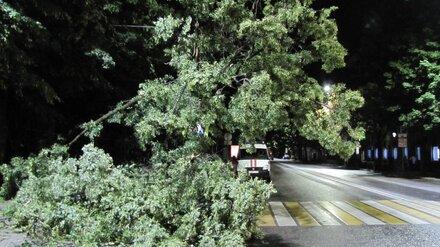 В Воронеже из-за урагана 7 деревьев рухнули на провода и машины