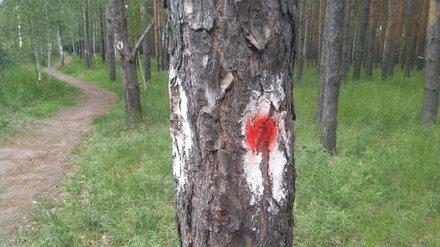 В воронежском микрорайоне в сосновом лесу появились странные отметки на деревьях