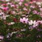 Синоптики пообещали воронежцам «светло-розовое» лето