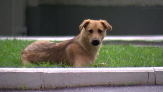 Бездомных собак с городских улиц предложат забрать воронежцам