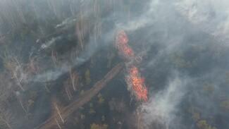 Крупный пожар рядом с воронежской Масловкой сняли на видео с высоты