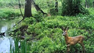 Воронежский заповедник опубликовал завораживающее видео с лесной камеры