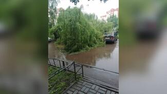 Упавшие после ливня деревья оборвали провода в Воронеже