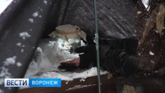 Воронежские художники отметили День замёрзшего чернозёма