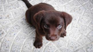 Выбросивший щенка с 6 этажа воронежец избежит наказания