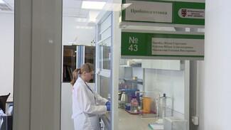 В Воронежской области не нашли семена с ГМО