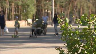 Красный свет для зелёной зоны. Какие парки Воронежа заждались очереди на реконструкцию
