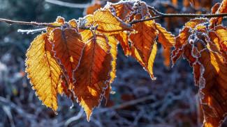Метеорологи пообещали зимнюю погоду в ноябре в Воронежской области
