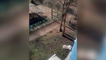 Под окнами воронежской многоэтажки нашли труп