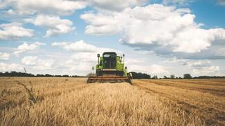 В Воронежской области будут судить тракториста за случайно раздавленного человека