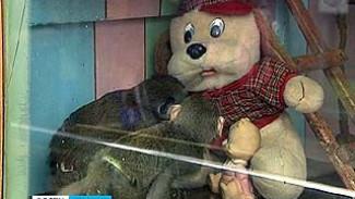 В Воронежском зоопарке в клетках теперь и плюшевые звери
