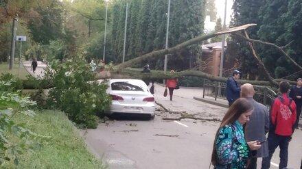 Упавшее на машину дерево стало причиной пробки на одной из Центральных улиц Воронежа