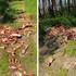 Кладбище из костей нашли в лесополосе воронежского микрорайона