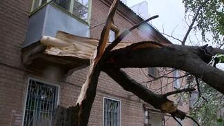 В Воронеже сильный ветер повалил 6 деревьев