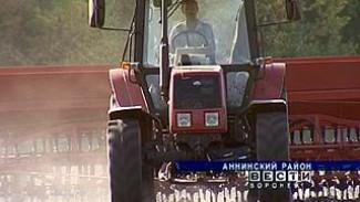 """""""Аннинский колос"""" готовится собирать урожай, на который претендуют бывшие партнеры"""