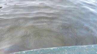 Под Воронежем на реке обнаружили огромное нефтяное пятно