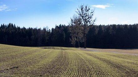 «Продимекс» завершил уборку сои в Воронежской области и посеял озимые