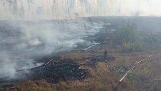 Воронежская область в выходные побила рекорд по числу пожаров