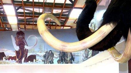 Музей-заповедник «Костёнки» позвал воронежцев на виртуальные раскопки
