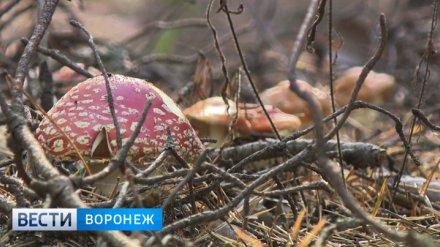 Для отравившейся грибами мамы 2 детей из Воронежа попросили сдать кровь