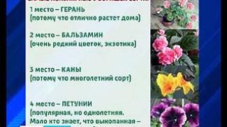 Дачный сезон в Воронеже особенно обострил ботанический вандализм