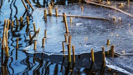 МЧС предупредило воронежцев о смертельной опасности тонкого льда