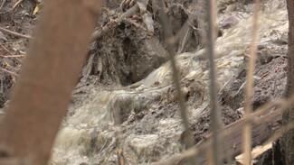 Жильцы воронежского комплекса «Берег» пожаловались на фекальное болото под окнами