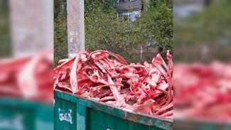 Воронежцев напугала гора окровавленных костей в мусорном баке