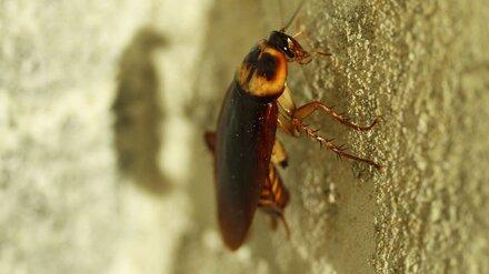 Облздрав отреагировал на нашествие тараканов в воронежской детской больнице