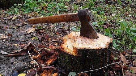 В Воронежском лесопарке из-за жалоб горожан остановили вырубку деревьев
