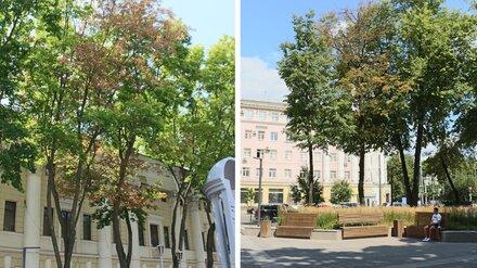 В Воронеже засохли деревья в «одном из красивейших скверов Европы»