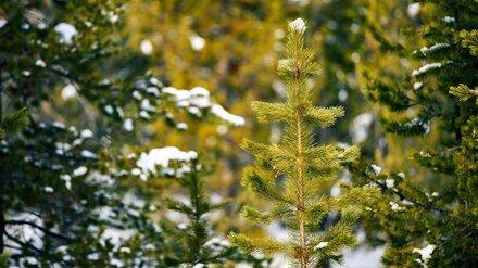Первый день нового года в Воронежской области будет тёплым