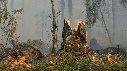 В Воронежской области объявили высший класс пожароопасности
