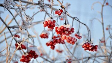 Воронежцам пообещали потепление перед Новым годом