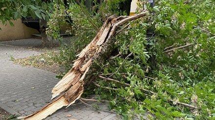 Дерево рухнуло на 12-летнюю девочку в воронежском селе