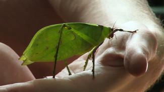 Студент-биолог начал сбор денег на открытие первого в Воронеже «дома» для насекомых