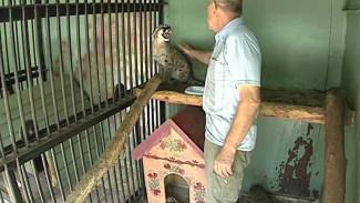 В зоопарке поселилась пума. Хищник – подарок воронежца