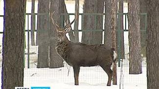 В Воронежский зоопарк доставили двух благородных оленей
