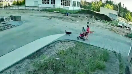 Стало известно о состоянии укушенного собакой в Воронеже 10-летнего мальчика