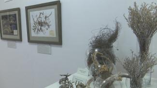 В воронежском музее открылась выставка трав Дивногорья