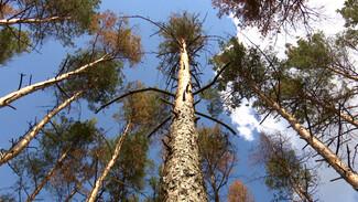 Воронежский Северный лес сделают зоной тихого отдыха