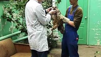 Сотрудники Воронежского зоопарка будут под присмотром врачей до выяснения причины гибели птиц