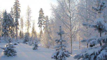 Высота снежного покрова в Воронеже перевалила за полметра