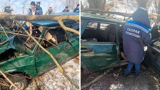 В Воронежской области водитель влетевшего в дерево ВАЗа чудом остался жив