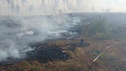 В Воронежской области из-за пожаров на 3 недели ввели новые ограничения